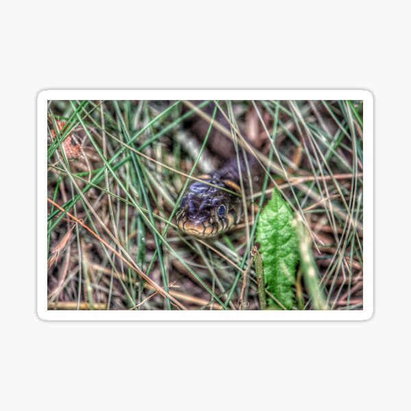 Grass snake Sticker