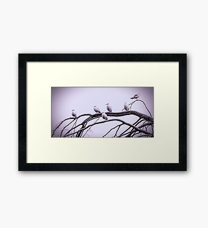 Not so angry birds Framed Print