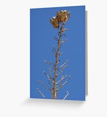 Seed Pods 2 Greeting Card