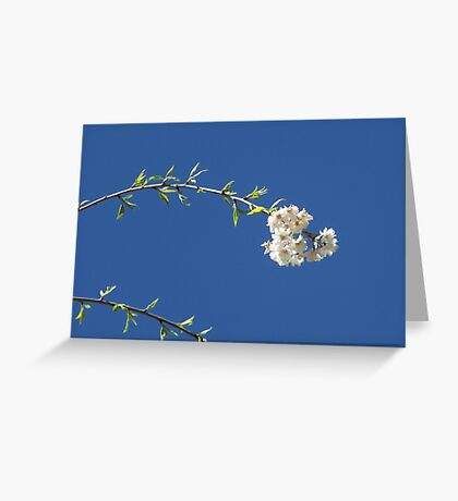 Blossoms and Sky Greeting Card