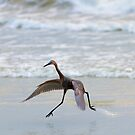Heron Ballet by DawsonImages