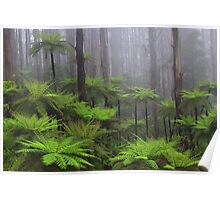 Ferns in the mist The Black Spur  Poster