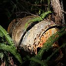 The Old Milk-can Mail-box by aussiebushstick