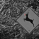 Caution: Reindeer Crossing by Scott Mitchell