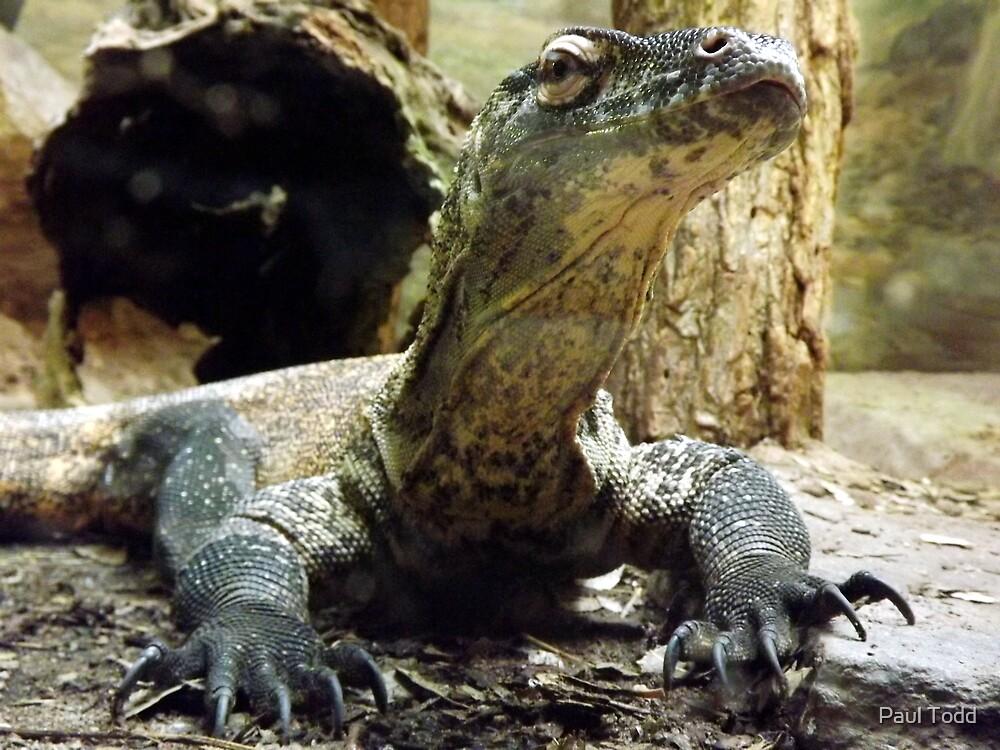 Baby Komodo Dragon by Paul Todd