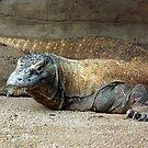 Komodo Dragon by Paul Todd
