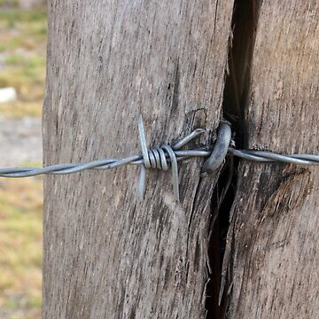 Barbed Wire in a Fence Pole by rhamm