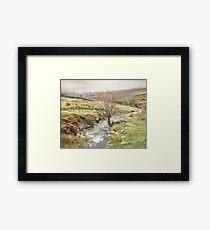 Autumn on Hamer Moor ~ North Yorkshire Framed Print