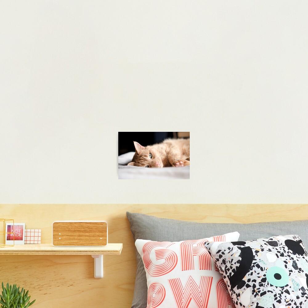 Repose Photographic Print