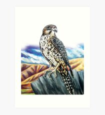 Native NZ Falcon Art Print