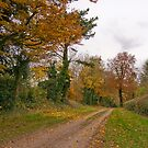 An autumn walk in Wiltshire by Tony Reed