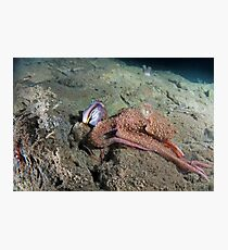 Octopus with a Sarcastic Fringe Head Photographic Print