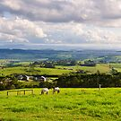 Rolling Hills - Kiama by Dilshara Hill