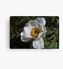 A White Flower Canvas Print