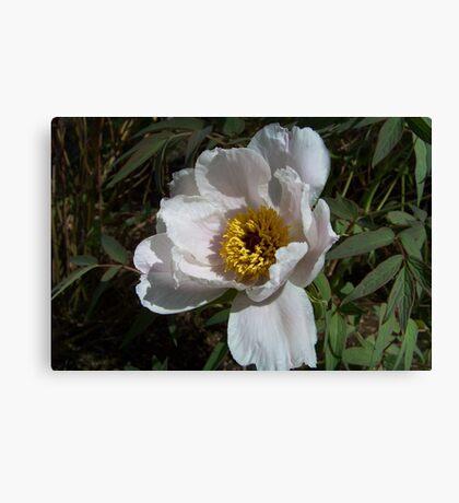 A White Flower Canvas Print