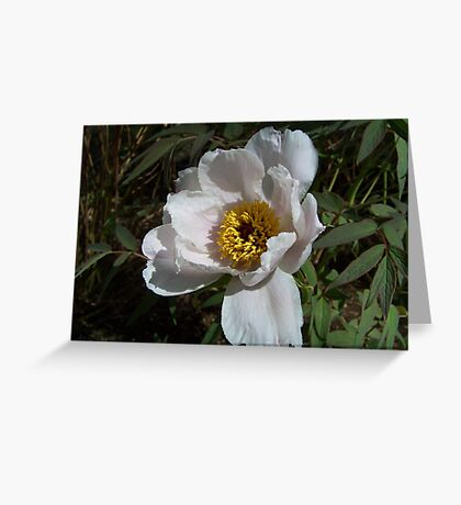 A White Flower Greeting Card