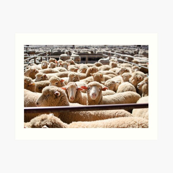 Sheep Sale  Art Print