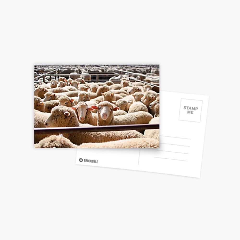 Sheep Sale  Postcard