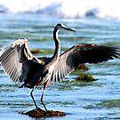 Blue Heron by Tim Horton