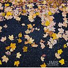 Yellow Fall Leaves by steeber