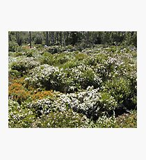 Boronia Mount Field NP - Peter Photographic Print