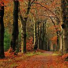 Our forest colours of early December by jchanders