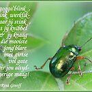 Gogga'blink by Rina Greeff