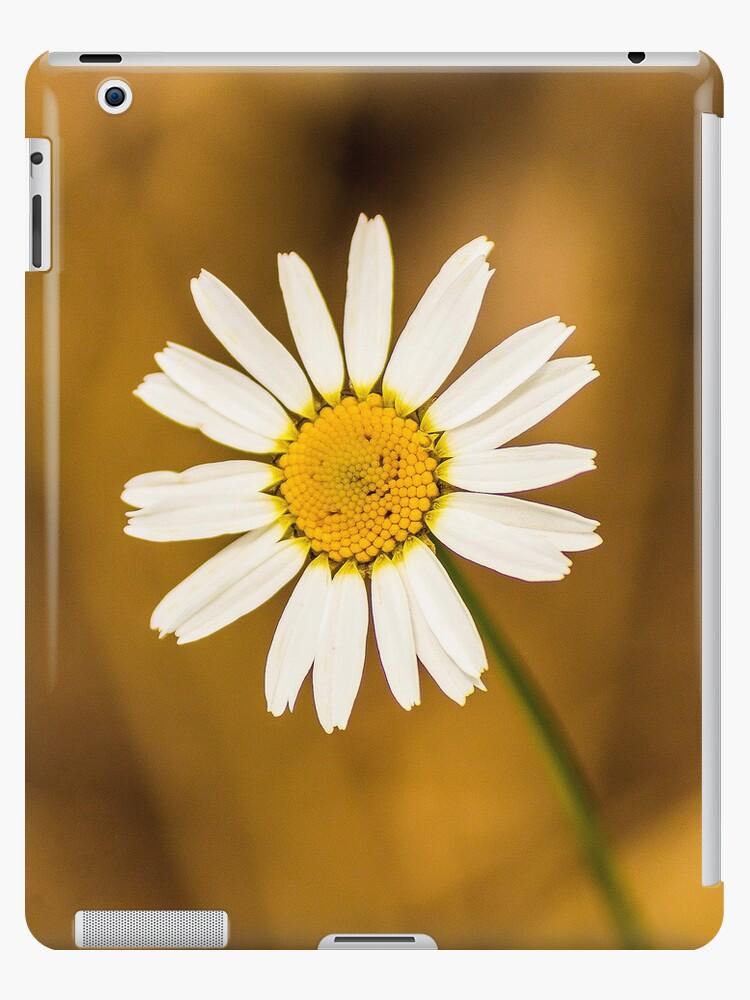 Daisy iPad case by John Velocci