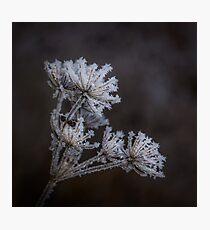 Frostwork Photographic Print