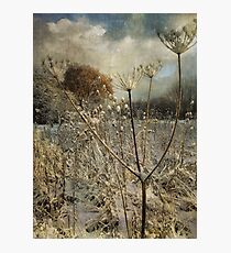 Winter in the Meadow Photographic Print