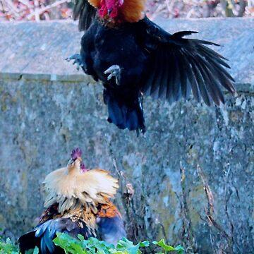 Dancing roosters by hartlandangel