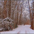Winter Wonderland by Mike Griffiths