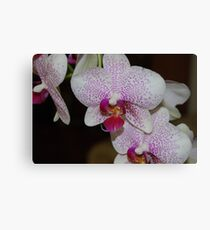Purple Speckled Orchid Canvas Print
