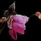 FROZEN ROSE~ by RoseMarie747