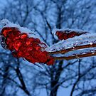 Sumac in Ice by artkitecture