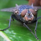 Flies Face by relayer51