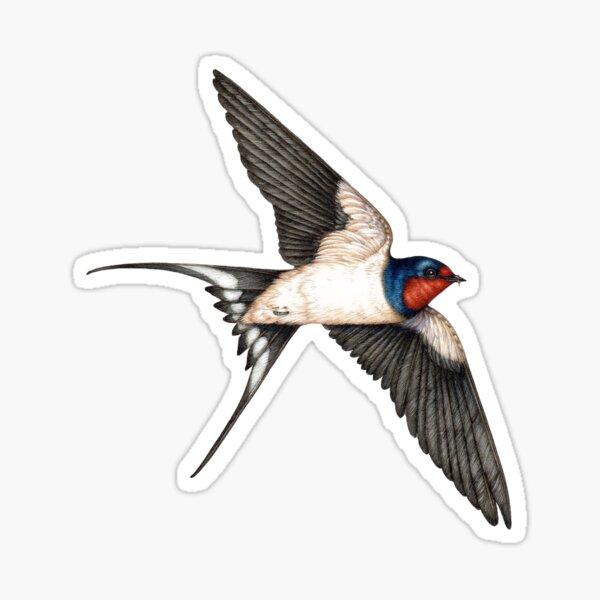 Barn swallow Hirundo rustica bird  Glossy Sticker