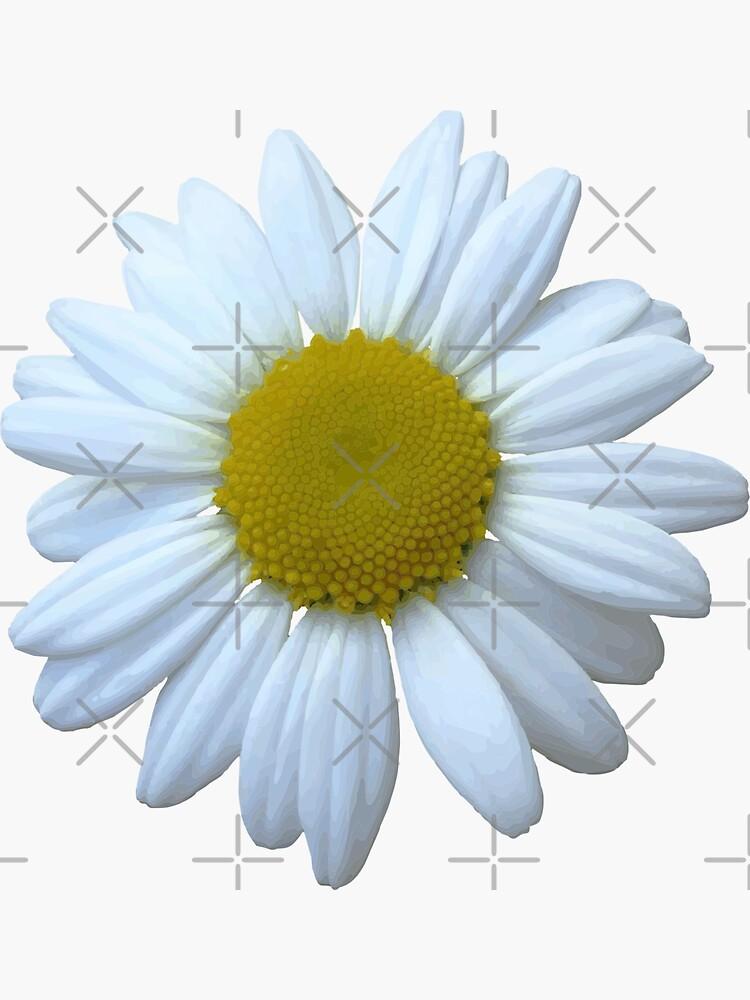 Wild Flower Daisy by carlarmes