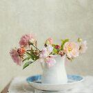 Winter Roses by Jill Ferry