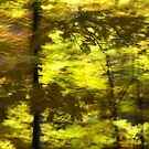 Leaf shadow study - 2012 by Joseph Rotindo