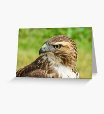 Fierce Gaze: Red-tailed Hawk Greeting Card