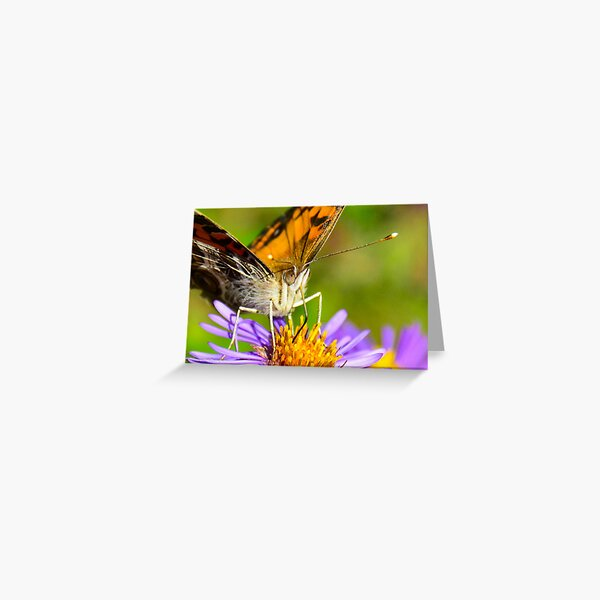 American Lady Butterfly on Aster Greeting Card