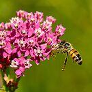 Bee and Milkweed by Nancy Barrett