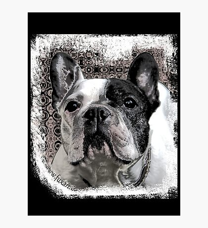 french bulldog Photographic Print