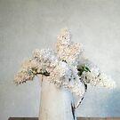 White Lilac by Jill Ferry