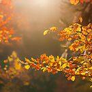 Autumn by Jill Ferry