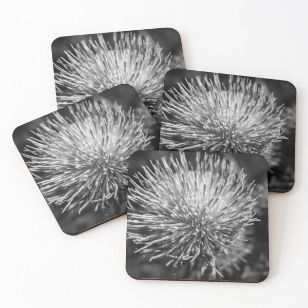 Black and white Thistle Coasters (Set of 4)