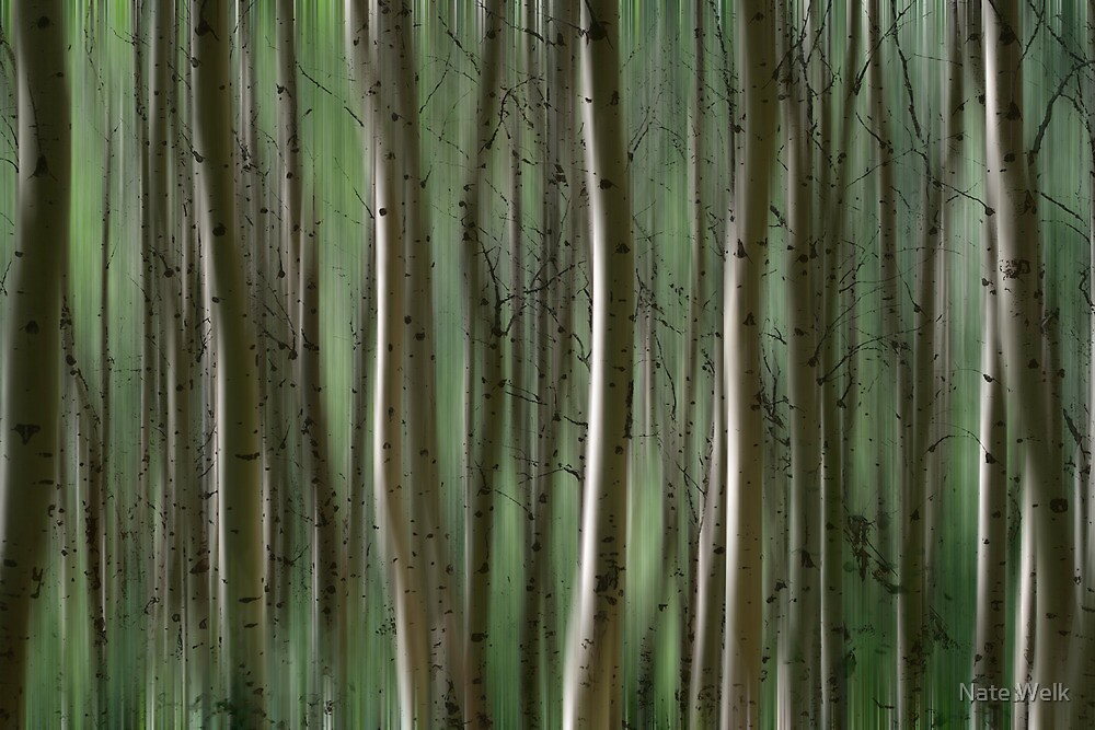 Abstract Aspen by Nate Welk