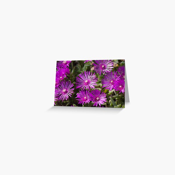 Ice Plant flowers Greeting Card