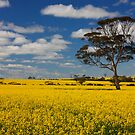 Tree in the Canola by Erika Lieftink